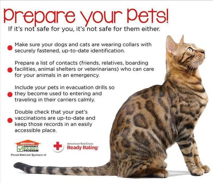Storm Damage Prep for your Pets
