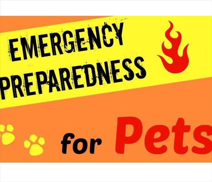 Storm Damage Prep your Pets!